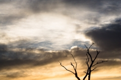 Dramatic Sunrise- Pantanal Brazil