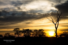 Daybreak and Tree Silhouettes- Pantanal Brazil
