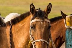 Horses- Pantanal Brazil